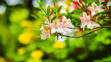 Flowers bush as summer nature background.