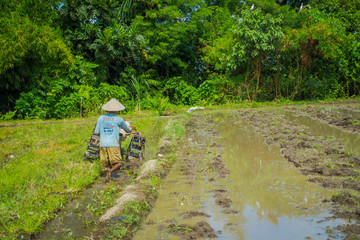 BALI, INDONESIA - APRIL 05, 2017: Farmer cleanning the area to plant some rice seeds in a flooded land in terraces, Ubud, Bali, Indonesia