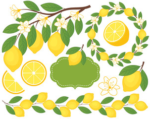 Vector Set with Lemons. Lemon Vector Illustration.