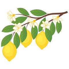 Vector Lemons with Flowers. Branch with Lemons. Lemon Vector Illustration.