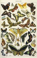 Butterflies in Larousse. Date: 1913