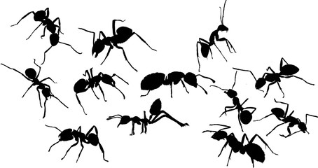 働き蟻たち