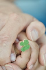 Hands of dad  and children holding the four-leaf clover
