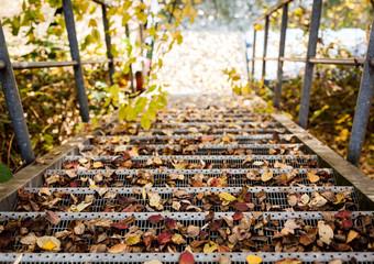 Treppe mit Geländer bedeckt mit Laub im Herbst