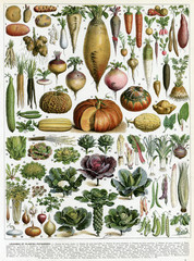 A Mixture of Vegetables. Date: 1913