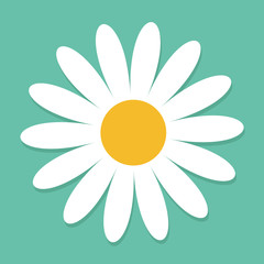 White daisy chamomile. Cute flower plant collection. Love card. Camomile icon Growing concept. Flat design. Green background. Isolated.