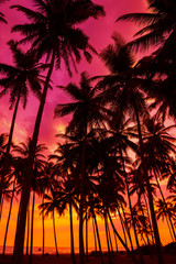 Palm trees silhouettes on tropical island beach at vivid sunset time