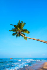 Palm tree hanging over the ocean beach