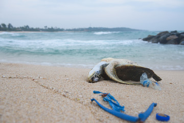 Dead sea turtle on the sand beach among ocean plastic waste