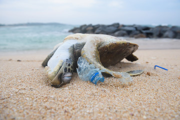 Photo sur cadre textile Tortue Dead turtle among plastic garbage from ocean on the beach