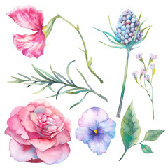 Hand painted floral elements set. Watercolor botanical illustration of garden and field flowers and leaves. Natural objects isolated on white background