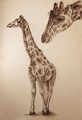 giraffe pencil drawing with paper texture