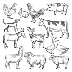 Vintage farm animals. Farming illustration in hand drawn style