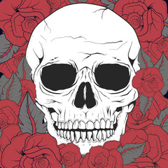 White old skull with red roses background