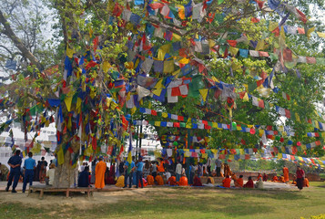 People are praying under Bodhi tree a place of Buddha enlightenment