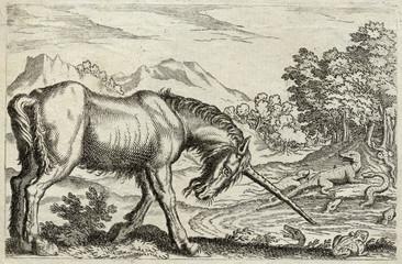 Unicorn - Reptiles. Date: 17th century