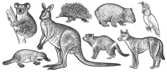 Animals of Australia set.
