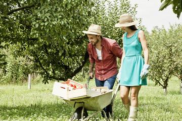 Young couple with wheelbarrow in vegetable garden