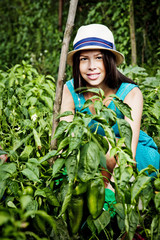 Young woman harvesting bell pepper in vegetable garden