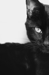 one side of a black cats face