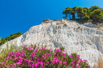 Wall Mural - Top of the white cliffs Mons Klint
