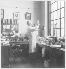 Fleming in his Lab - Photo. Date: 1881 - 1955