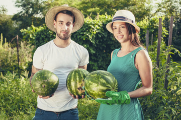 Young couple harvesting watermelons