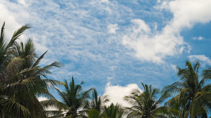 Coconut trees with vivid sky and cloudy