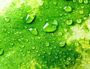 Texture of green peel of watermelon and drops