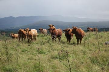 Rinder Highlands