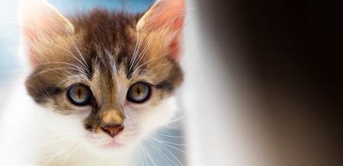 Lost Lone cute kitten is looking for a host