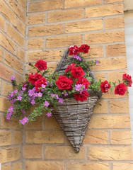 Hanging basket with range of red and pink petunia.