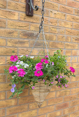 cone wicker hanging basket with pink and white petunia flowers