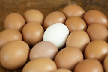 Group of brown eggs expect one, which is white coloured. It shows the uniqueness between individual and the mass