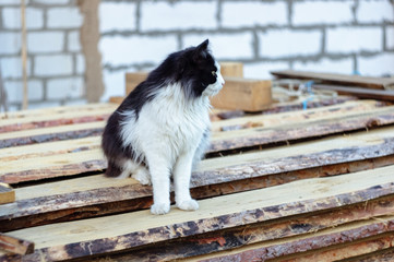 A black-and-white cat sits in a village on a pile of pine boards.