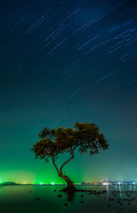 Wall Mural - Landscape with star trail and silhouette mangrove tree in sea. Long exposure photograph.
