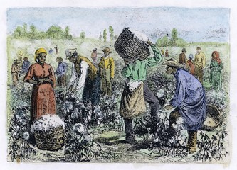 Cotton Picking. Date: 1874