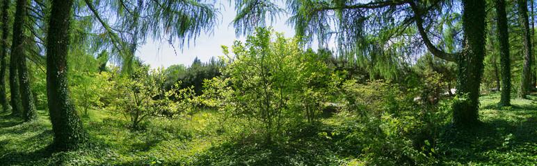 Fototapeta Old secret garden obraz