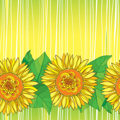 Vector seamless pattern with outline open Sunflower or Helianthus flower in yellow and green leaves on the striped background. Floral pattern with ornate Sunflower in contour style for summer design.
