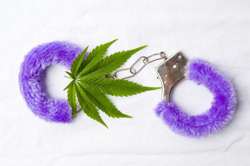 Marijuana plant and toy handcuffs