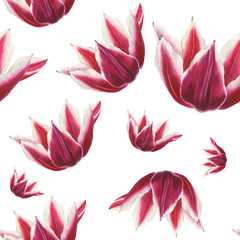 White and red tulip flower on white background. Seamless watercolor pattern