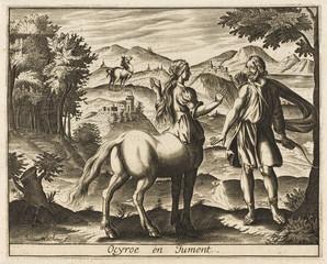 Ocyrrhoe - Mare