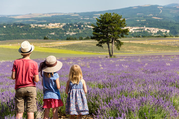 Three kids in a row - family holidays in Provence - observing lavender fields