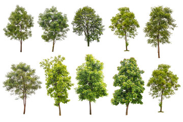 collection off green trees isolated on white background