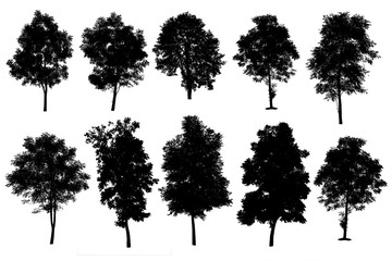 collection of silhouette of trees isolated on white background