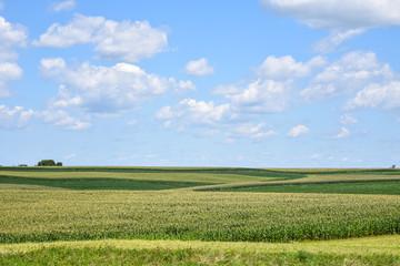 Wisconsin Corn Fields