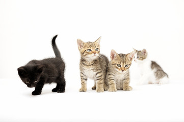 cats, ear, emotion, empty, expression, eyes, face,  felines, friendship, young,