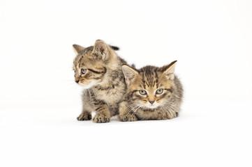 cats, ear, emotion, empty, expression, eyes, face, feline, felines, friendship, young,