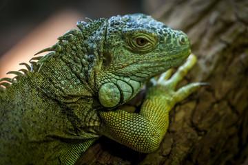 Close-up view of a lizard.