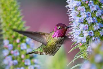 A hummingbird by flowers.